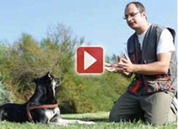 Come educare un cane